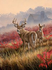 shorthills-deer-and-sumac